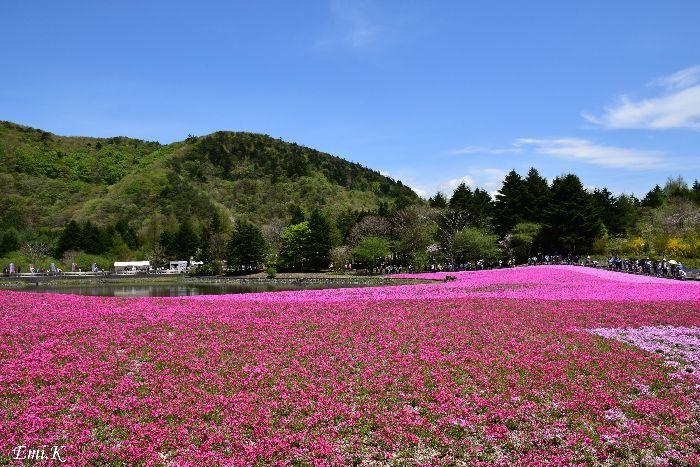 001-Emi-富士芝桜まつり