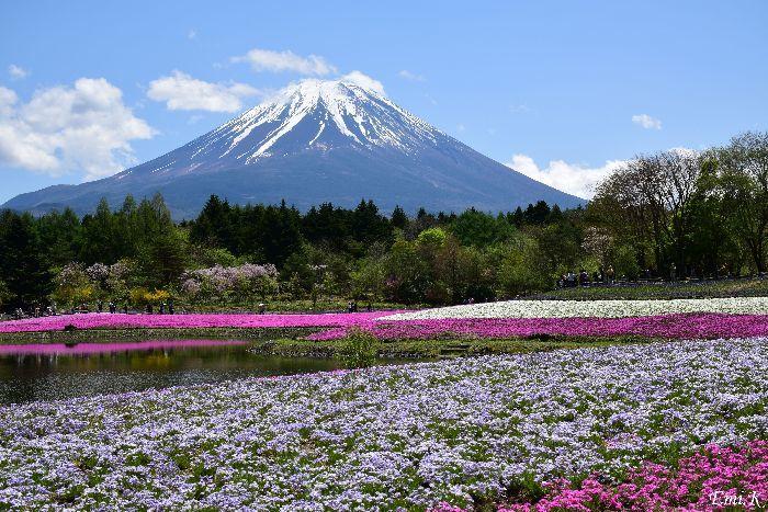 004-Emi-富士芝桜まつり