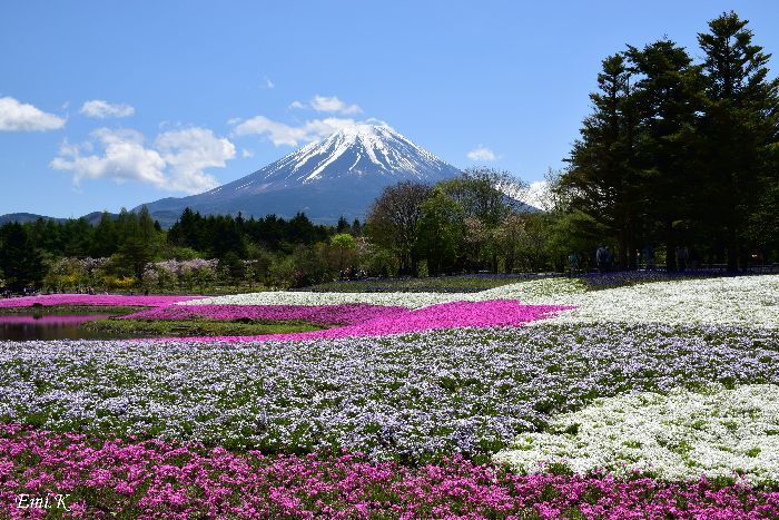 003-Emi-富士芝桜まつり