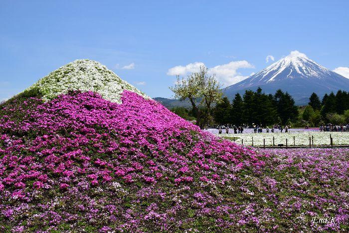 019-Emi-富士芝桜まつり