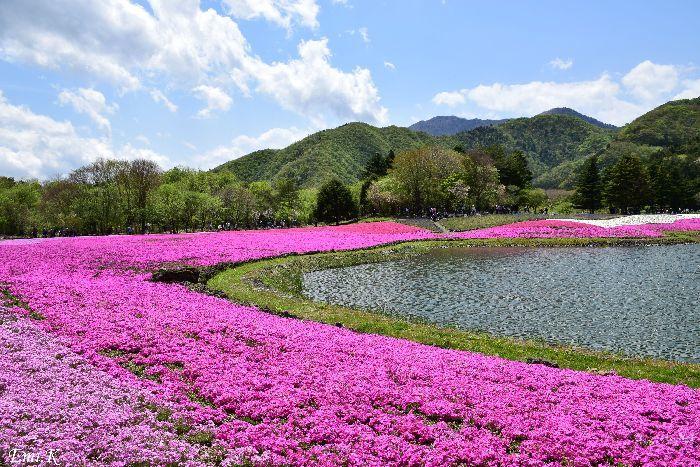 033-Emi-富士芝桜まつり