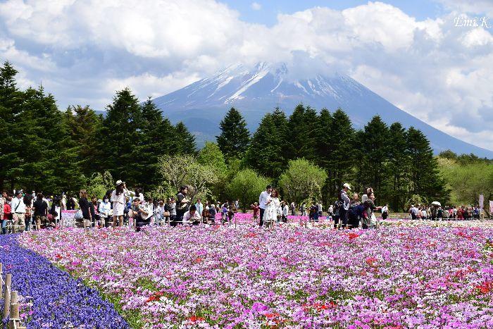 050-New-Emi-富士芝桜まつり-アネモネ-ムスカリ