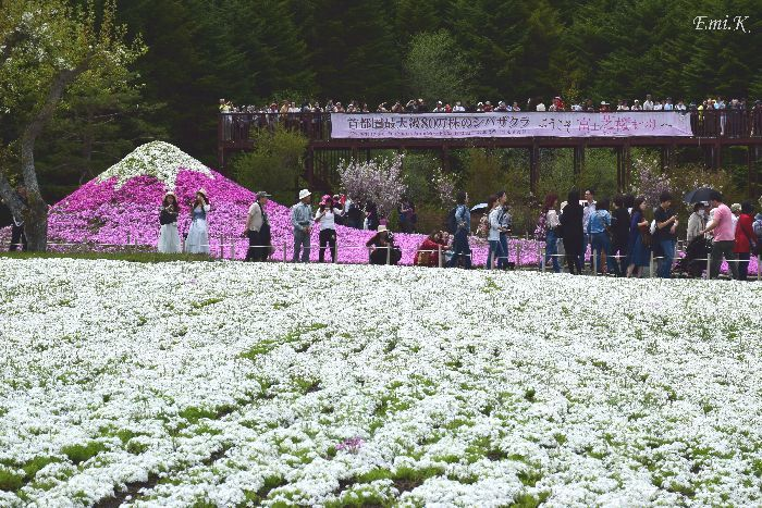 056-New-Emi-富士芝桜まつり