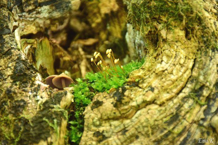 073-New-Emi-木のくぼみの中の小さな世界
