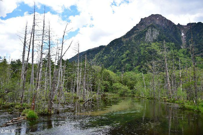 103-Emi-立ち枯れの木々岳沢湿原