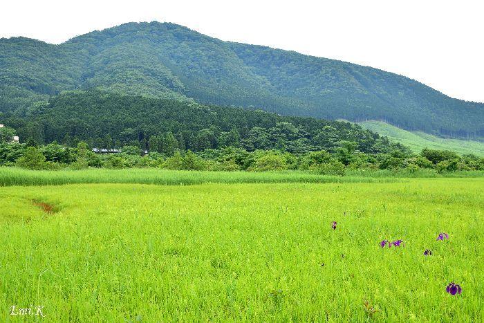 060-New-Emi-仙石原湿原