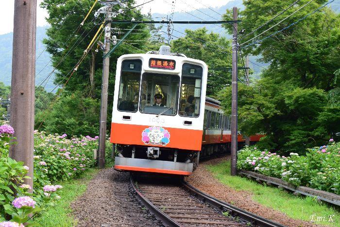 104-Emi-箱根あじさい電車