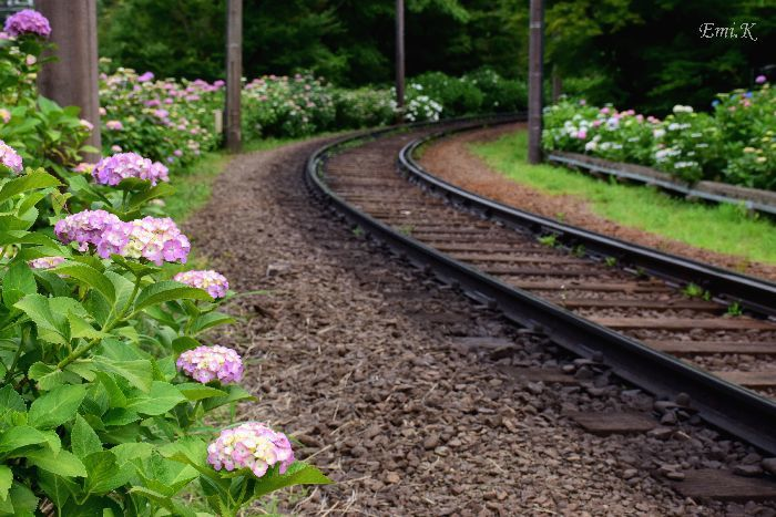 136-New-Emi-紫陽花と登山鉄道
