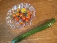 トマトこんなに、キュウリも採れた