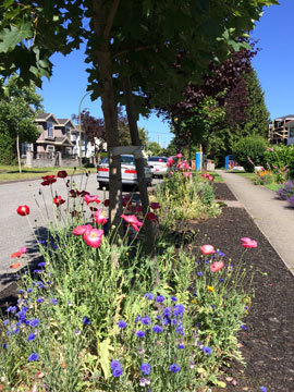 vancouver_2017-summer_1.jpg