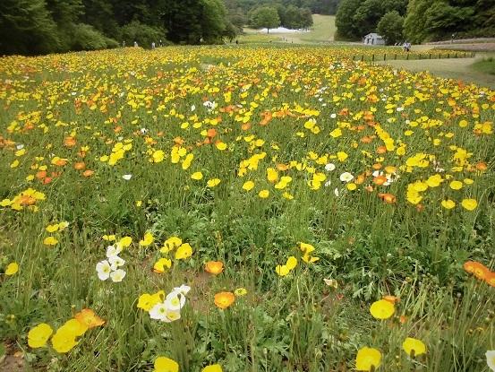 17.5.9 森林公園・ルピナスほか花など (111)