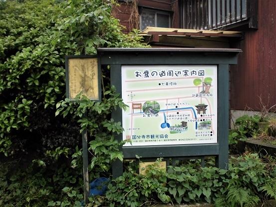 17.5.10 山行・お鷹の道~殿ヶ谷庭園~滄浪泉園 (72)