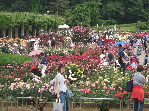 1 17.5.18 山行・神代植物公園 (291)