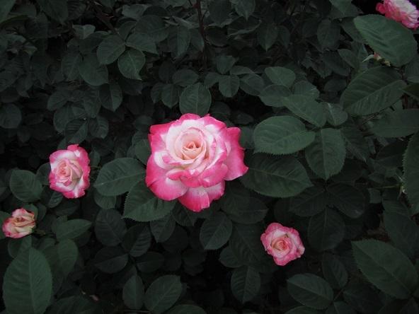 2 17.5.18 山行・神代植物公園 (113)