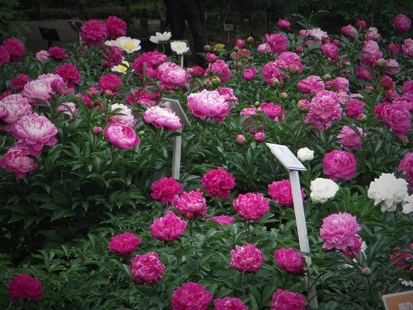 6 17.5.18 山行・神代植物公園 (295)