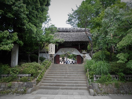 7 17.5.18 山行・神代植物公園 (79)
