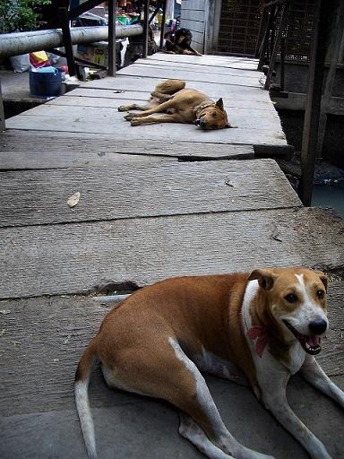 07.6.10朝の風景・緑参考・犬 037