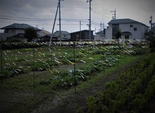 17.7.6 畑の防鳥 (88)