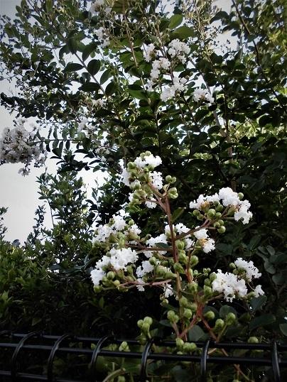 6 17.7.7 散歩・ひまわりほかブログ用  (8)