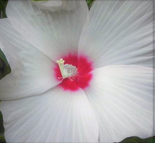 17.7.21 散歩の花 (1)