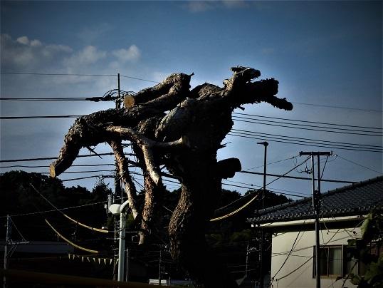 17.7.11 北高尾ハイク  (39)