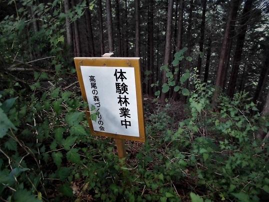 17.7.11 北高尾ハイク  (13)