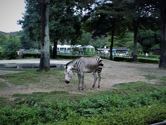 17.8.13 こども自然動物公園 (91)