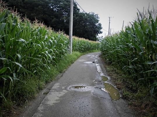 3 17.8.17 ママチャリング、山口家の雨漏り (47)