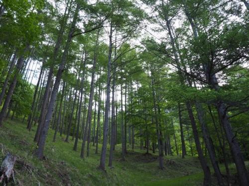 06ogurakaramatsu.jpg