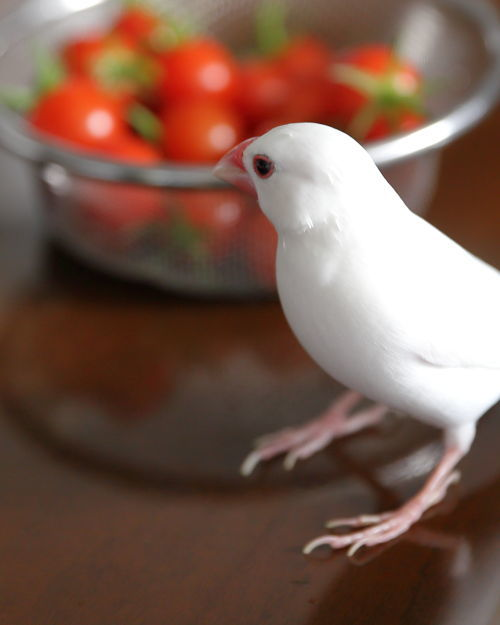 tomato bunn (1)