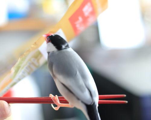 kuro hasiwatari