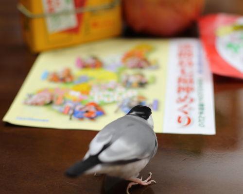 awaji miyage (3)