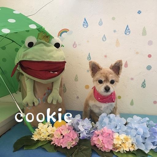 cookie 三島