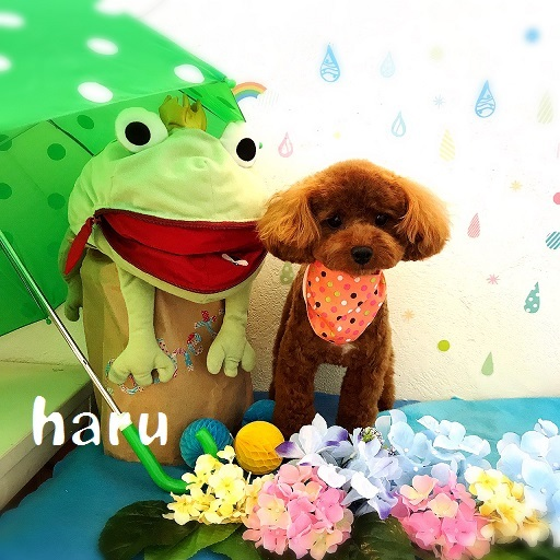 haru 美甘