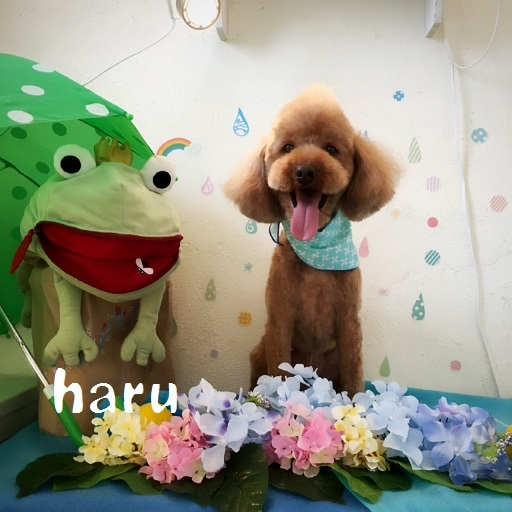 haru 住田