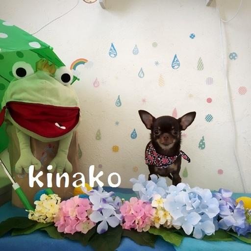 kinako 出宮
