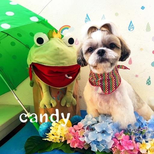 candy 石丸