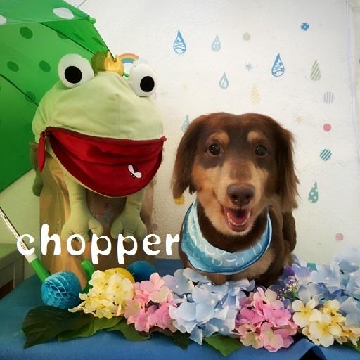 chopper 溝上