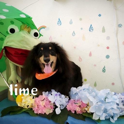 lime 松井
