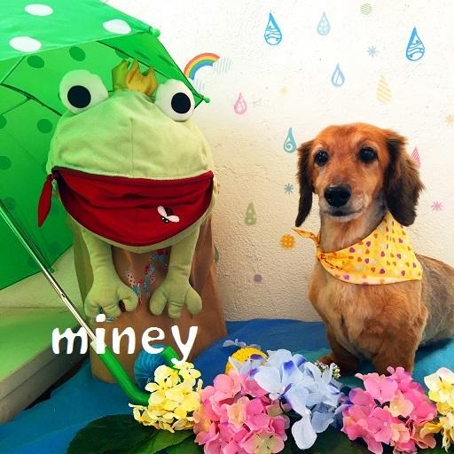 miney 延江