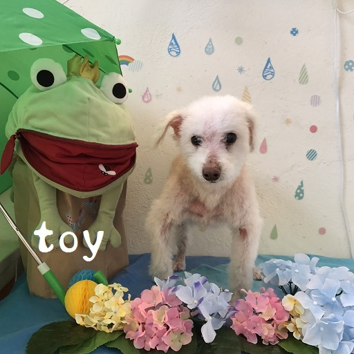 toy 林