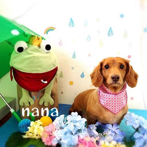 nana 夏山