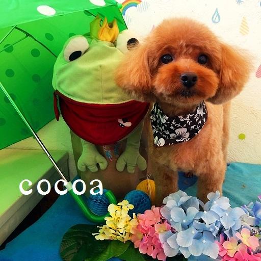 cocoa 片木