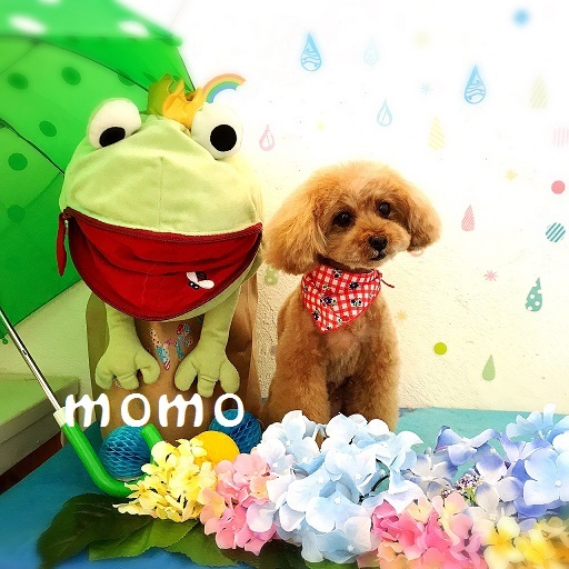 momo 岡