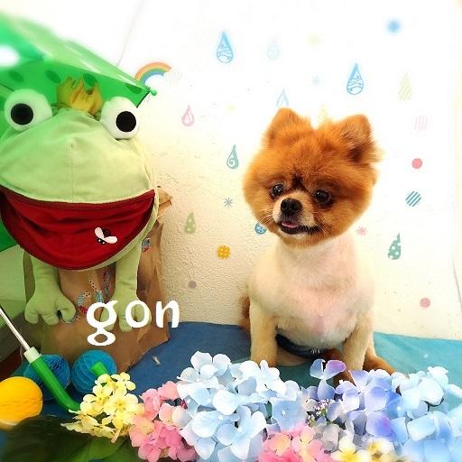 gon 福田