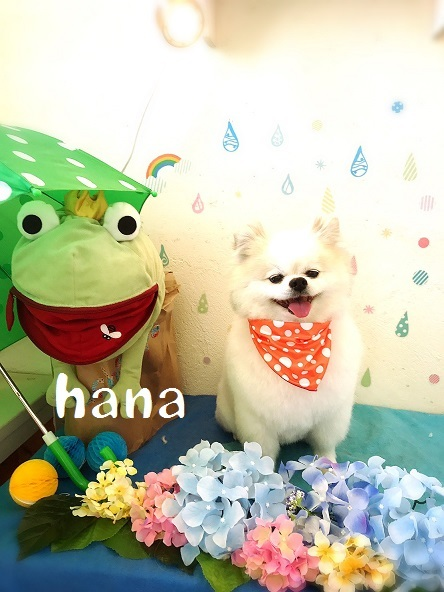 hana 福田