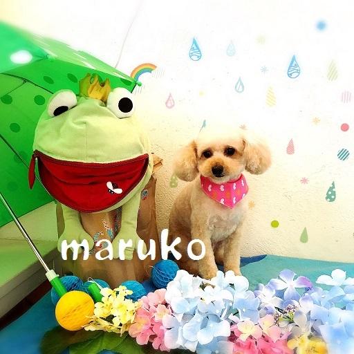 maruko 新田