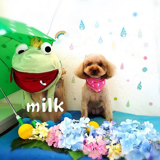 milk 新田
