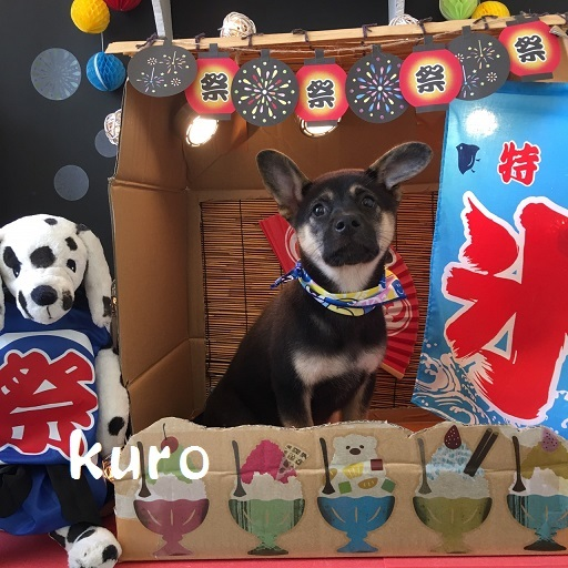 kuro 佐々木