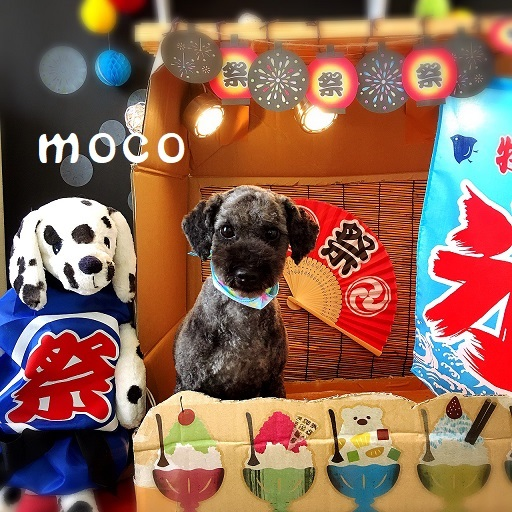 moco 米澤
